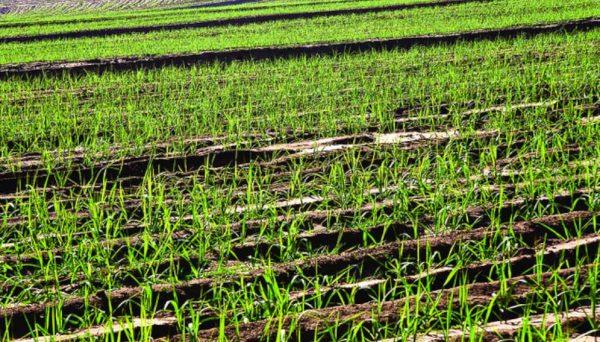 تعاون بين شركتي BP وBunge لانشاء منتج عالمي عالي الكفاءة لإيثانول قصب السكر في البرازيل