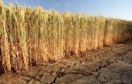 إيه بي بي توفر حلول ومعدات متطورة لمشروع مستقبل مصر الزراعي بتوشكى في وقت قياسي
